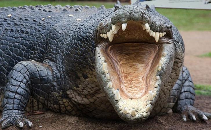 ŞOCANT: Un crocodil a ucis şi mâncat o femeie însărcinată. Ce a făcut soţul acesteia e de NEIMAGINAT