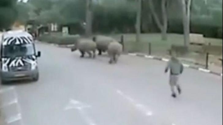 Un rinocer din Nepal face ravagii! A ucis o femeie şi a rănit mai multe persoane