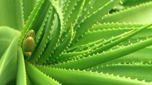 Plante miraculoase