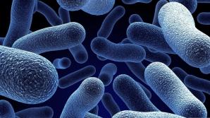 Bacteriile bune din organismul nostru. Iată ce semnale trimit către creier