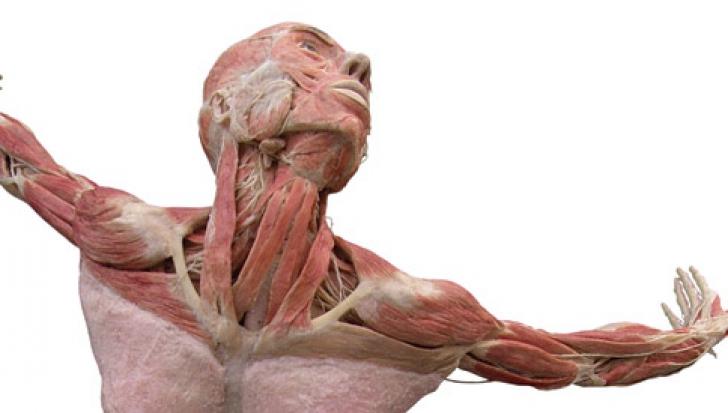 Prima expoziţie permanentă a unor corpuri umane disecate şi plastifiate, deschisă la Berlin