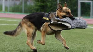 Demonstrații ale polițiștilor, cu câini și standuri cu tehnică, în Parcul Lumea Copiilor