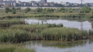 """Incendiu în """"Delta Bucureștiului"""". Aproximativ cinci hectare au fost distruse"""