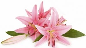 Cele mai frumoase flori de 8 martie şi simbolistica lor
