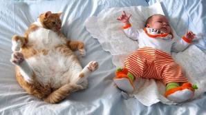 Cele mai frumoase fotografii cu pisici şi copii