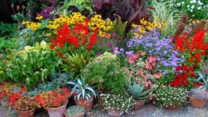 9 plante de interior magice care atrag dragostea, bucuria și prosperitatea