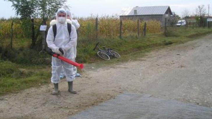 Gripă aviară în Bulgaria