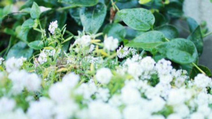 Aer uscat în casă: 5 sfaturi pentru o umidificare naturală