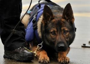 Câinii poliţişti, concediaţi prin mica publicitate