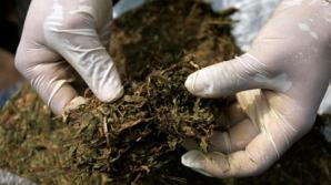 Încă o ţară din Europa legalizează canabisul folosit în scopuri medicinale
