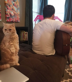 Cea mai simpatică pisică