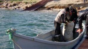 Aproape 3,5 tone de pește, confiscate de polițiști