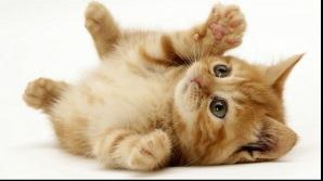 Veşti proaste pentru iubitorii de pisici. Iată cât de ataşate sunt ele de stăpânii lor
