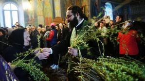 Tradiţii de Florii: Salcia tămăduitoare şi adunarea stâlpărilor de la Sălişte