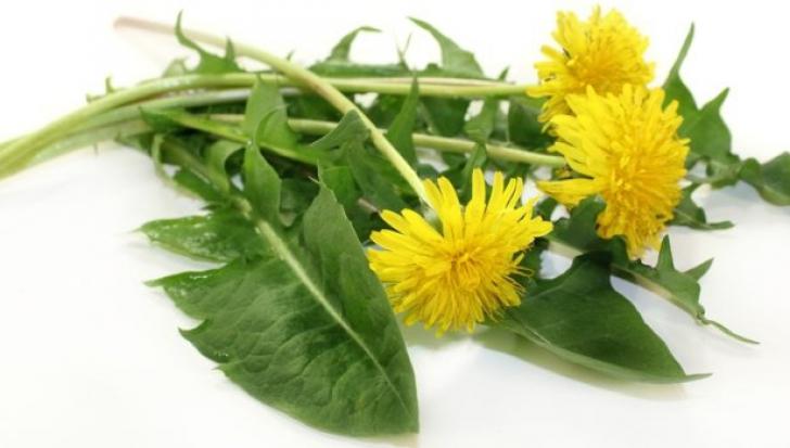 frunze de păpădie pentru dureri articulare