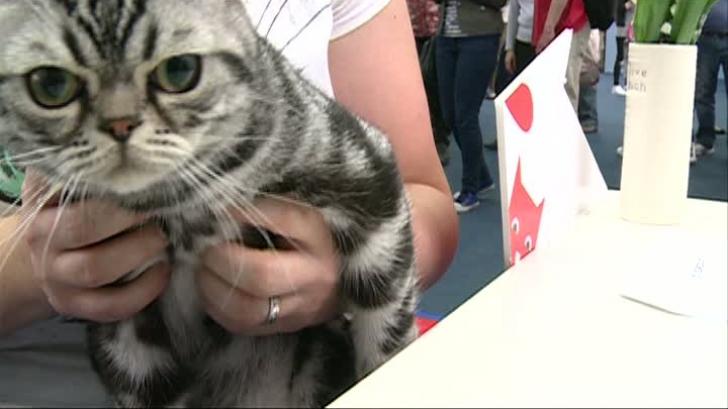 Se caută o pisică director de comunicare: profilul candidatului ideal. Care e salariul oferit