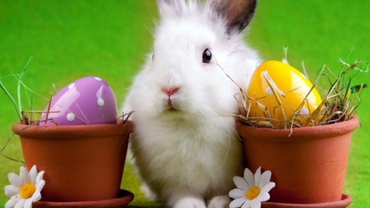 Cele mai bune bancuri de Paște