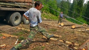 Situaţie incredibilă legată de lemnul românesc