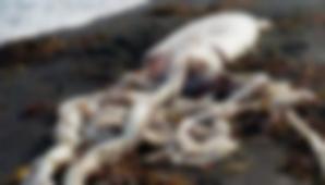 Descoperire terifiantă pe plajă. Apele au adus la mal ceva monstruos