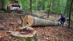 Ministerul Mediului: Exporturile de bușteni, cherestea și lemn de foc, suspendate până la 31 august