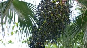 Fructul minune care slăbește, curăță intestinele, reduce colesterolul și apără inima