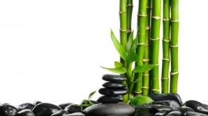 Ai un bambus în casa? Mare atenţie! Iată ce efect are asupra familiei tale