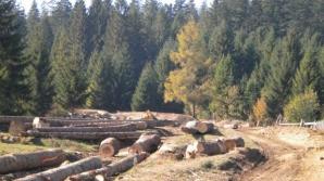 Ministerul Mediului avertizează: 420.000 de hectare de pădure sunt expuse tăierilor ilegale