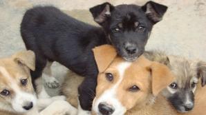 Atenţie la câinii maidanezi. Criză de vaccin antiraic, în spitalele din ţară