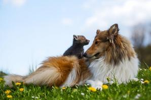 Prietenie impresionantă