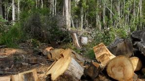 Ponta: Să ne mobilizăm și să avem o legislație care să interzică exportul de lemn neprelucrat
