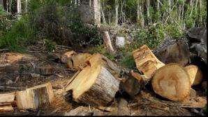 Păduri tăiate ilegal