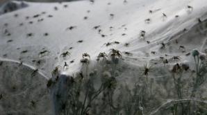 <p>Imagini apocaliptice în Australia: a plouat cu milioane de păianjeni</p>