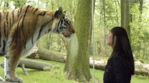 Un tigru, 7.000 lei