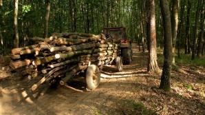 Guvernul vrea să interzică, limitat, exportul de lemn. Ponta: Soluţie la Justiţie, altfel plecaţi!