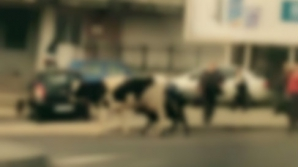 Apariţie ieşită din comun pe o stradă intens circulată din Iaşi. Trecătorii, înmărmuriţi!