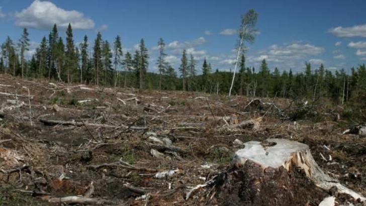 Guvernul sesizează DNA în cazul defrişărilor de păduri