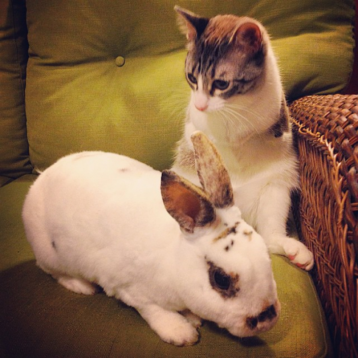 Imagini înduioşătoare. Povestea impresionantă a pisicii cu două lăbuţe