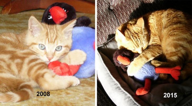 Fotografii adorabile cu animăluţe şi jucăriile lor