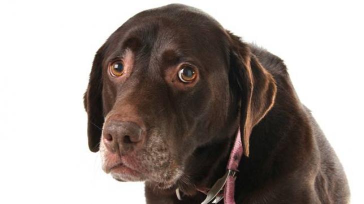 5 lucruri incredibile pe care câinii le simt despre tine