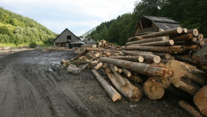 Parlamentarii o iau înaintea Guvernului: Au depus un proiect pentru suspendarea exportului de lemne