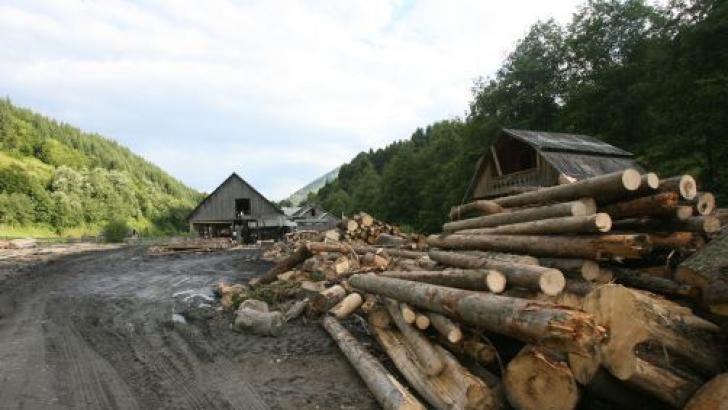 Ponta: Suspendarea exportului de lemne, promovat prin ordonanță de urgență