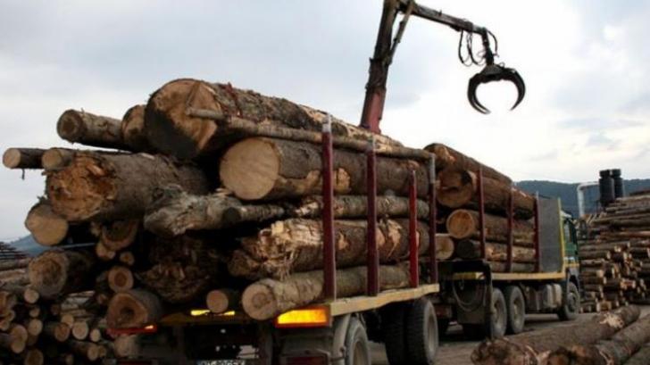"""CE anunță """"măsuri potrivite"""" dacă România va încalcă legislația prin limitarea exportului de lemn"""