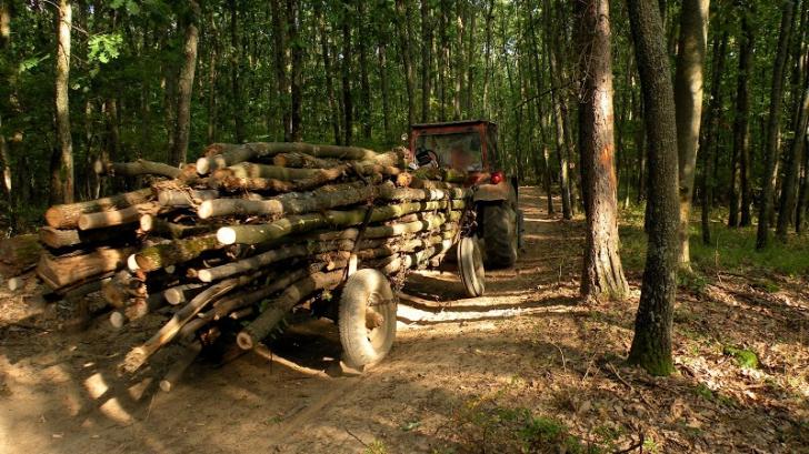 Au plecat să fure lemne. Ce a urmat este pur şi simplu tragic