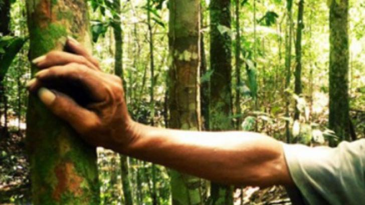 Ecologişti, atacaţi cu bolovani în munţi, de un grup de necunoscuţi