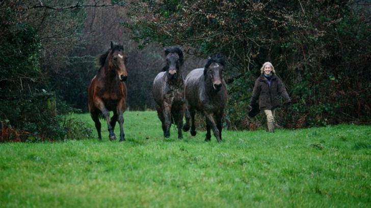 Filmarea care dovedește că animalele au amintiri: Revedere emoționantă între trei cai