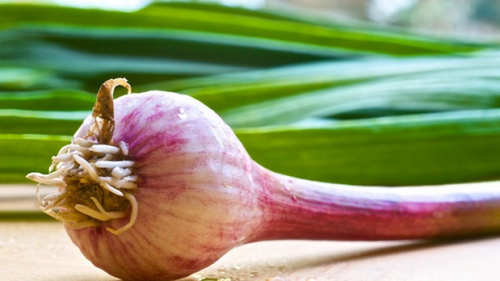 Usturoiul verde: opt beneficii fantastice pentru sănătate