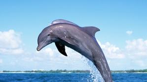 VIDEO. Pui de delfin, salvat din plasele pescarilor
