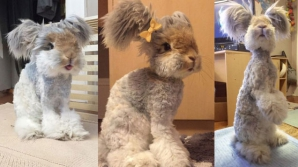Cel mai drăgălaş iepure din lume: Urechile lui arată ca nişte aripi de îngeraş