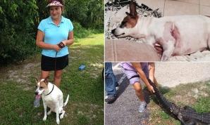 Femeie din Florida, luptă corp la corp cu crocodilul