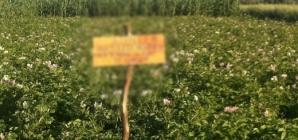 Viralul zilei. Cum îşi apără un fermier din judeţul Cluj culturile de atacul hoţilor / Foto: dejeanul.ro